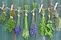 Экстракты и сборы трав для настоек и водок