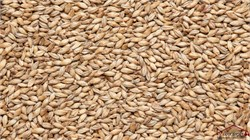 Pilsner malt, Viking malt - фото 9921