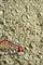Смесь для Нюрнбергских колбасок-гриль - фото 11435